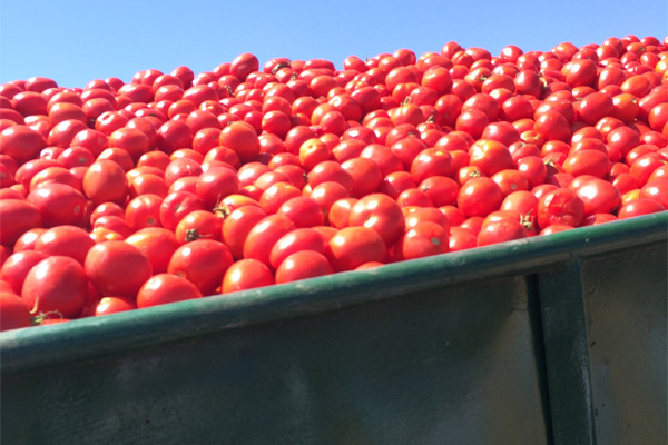 Why we eat tomato paste